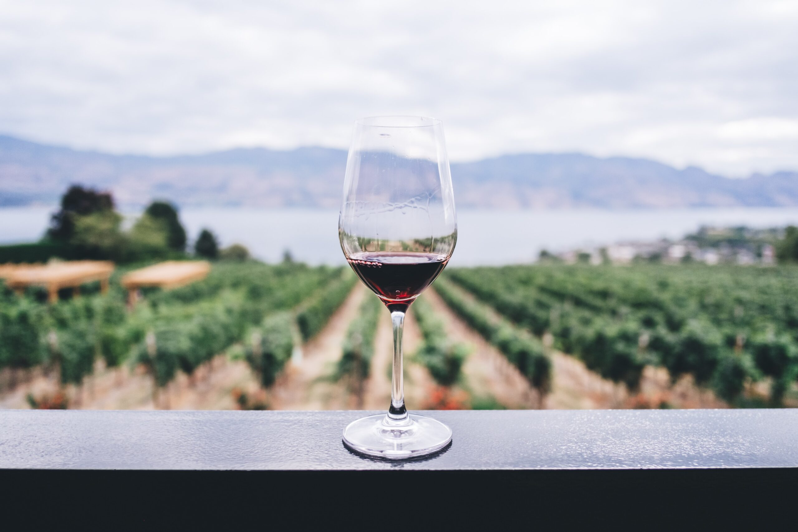 a glass of dry farm wine in front of a vineyard