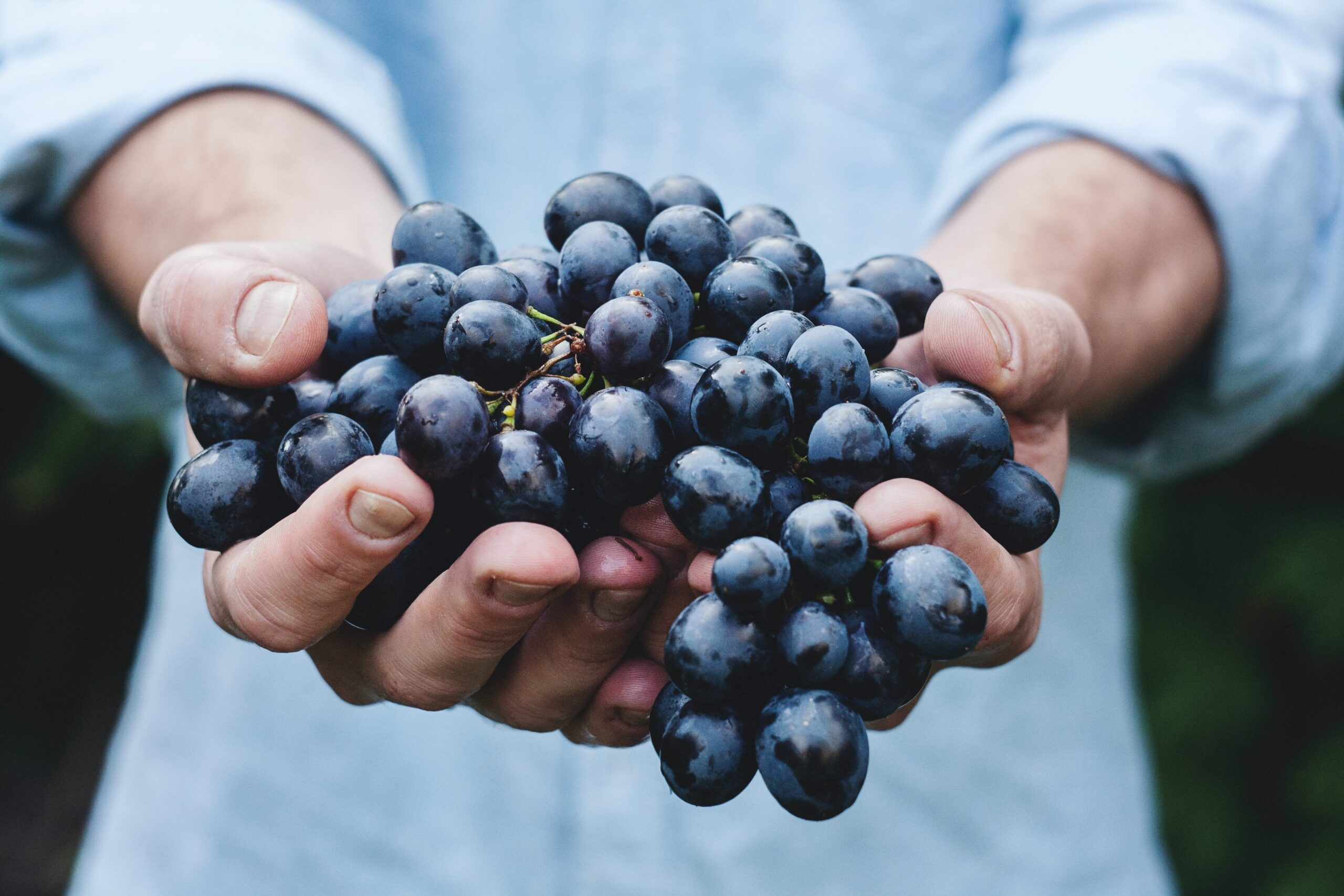 close up of a person holding a beautiful bunch of red grapes